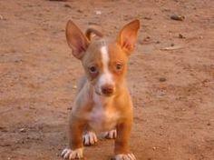 maneto pup so cute!!!