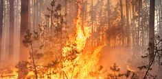 Tips for Surviving a Wildfire