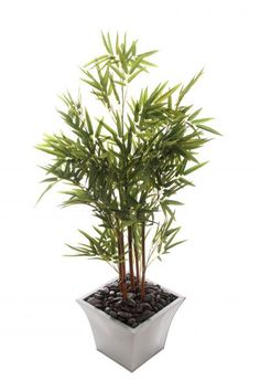 """Buy Artificial 3ft 6"""" Fountain Bamboo Tree - Artificial Silk Plant and Artificial Tree Range Japanese Bamboos with Natural Stem from Artplants.co.uk"""