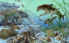 Marine Habitats | Gulf Coast Florida Miocene Marine Habitat Group.