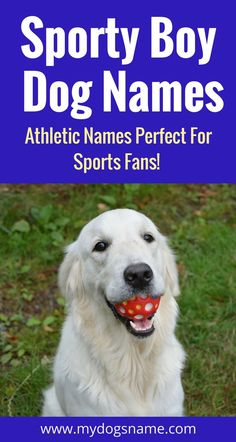 If you're a sports fan, these sporty dog names are perfect for your new pup!