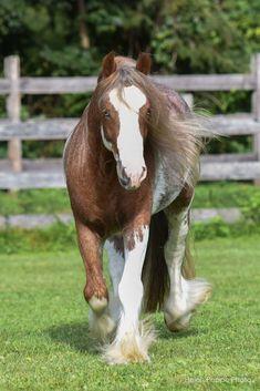 Schleich caballos Horse Club caballo poni Shire andaluces Clydesdale pinto etc.