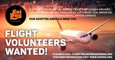 We have a number of rescued animals that have been adopted and are waiting to get to their forever homes. Can YOU help us get them there by being a FLIGHT VOLUNTEER? Destinations needed: Washington DC, New York, Atlanta, Los Angeles, Florida, Montreal and Toronto. We organize everything and there is NO COST to you. Previous flight volunteers have described it as the most rewarding experience of their lives! EMAIL flightvolunteer@soidog.org.