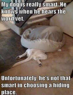 Hilarious this is so funny the first time i saw this I think I laughed for an hour!🐾 I love dogs so this is one of the best photos I have ever seen. I have a dog and she hates to go to the vet. Funny Animal Memes, Cute Funny Animals, Funny Animal Pictures, Funny Dogs, Funny Memes, Dog Pictures, Funny Captions, Funny Kitties, Funny Horses