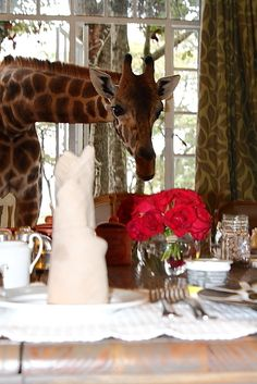 Have Dinner with a Giraffe / Giraffe Manor near Nairobi, Kenya