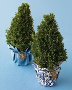 Rosemary Trees -- Use scraps of festive fabric to wrap the pots of rosemary, turning them into decorations or holiday gifts for the apartment kitchen as cooking herbs. via @Martha Stewart