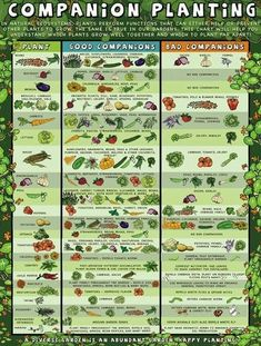 Companion Gardening Companion planting guide for organic gardening. - Companion Planting Guide for Garden Tower Project. Learn more for any of the various topics that will help you bring homegrown organic produce to your table Veg Garden, Easy Garden, Vegetable Gardening, Veggie Gardens, Beginner Vegetable Garden, Edible Garden, Small Vegetable Gardens, Starting A Vegetable Garden, Vegetable Garden Design