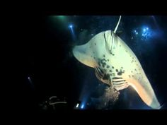 Kona Manta Ray Night Dive - one of the coolest things i've done!! Highly recommended :-)
