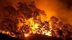 As 'aves incendiárias' que usam o fogo para facilitar a caça