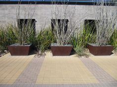 Maybe not the spiny stuff... might work well for bamboo.  Ocotillos in Corten Planters