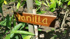 Luwak Coffee Plantation In Bali