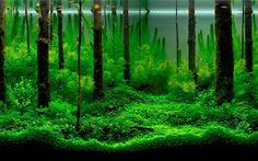aquarium desktop wallpaper pictures free