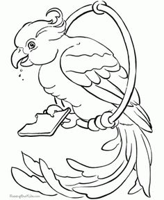 Parrots On Eating Food Coloring Page For Kids And Adults From Birds Pages