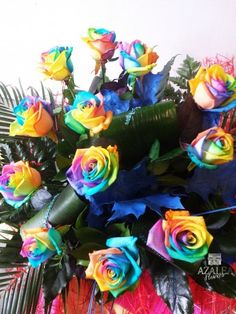 rainbow roses flowers delivery in aberdeen from azalea