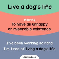 Do you live a dog's life? -         Repinned by Chesapeake College Adult Ed. We offer free classes on the Eastern Shore of MD to help you earn your GED - H.S. Diploma or Learn English (ESL) .   For GED classes contact Danielle Thomas 410-829-6043 dthomas@chesapeke.edu  For ESL classes contact Karen Luceti - 410-443-1163  Kluceti@chesapeake.edu .  www.chesapeake.edu