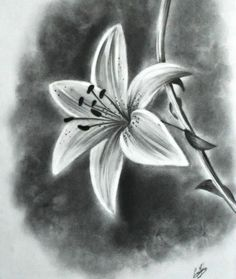 Realistic flower drawing tutorial and beautiful flower drawings and realistic color pencil drawings 3d Pencil Sketches, Pencil Drawings Of Flowers, Flower Sketches, Pencil Art, Drawing Sketches, Art Drawings, Drawing Flowers, Drawing Ideas, Flower Sketch Pencil