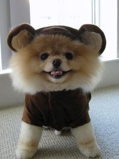 i'm not big into dressing up dogs but this is admittedly adorable.