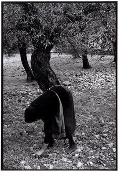 "by Constantine Manos, Gathering olives, Greece, Peloponnesus, 1964 ""A Greek Portfolio"" Greece Photography, Street Photography, Landscape Photography, Magnum Photos, Old Photos, Old Pictures, Greece People, Greece Pictures, Photographer Portfolio"
