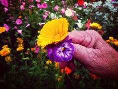 Flowers- Hand - People- Time
