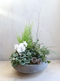 winter holiday plant in stone bowl white green pinecones sticks Dish Garden, Garden Shop, Container Plants, Container Gardening, Christmas Plants, Christmas Decor, Concrete Bowl, Flower Branch, Faux Succulents