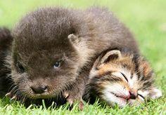 Unlikely friends- slideshow - slide - 4 - TODAY.com 36 different weird animal friends!!