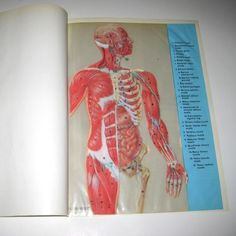 Vintage Illustrated Transparency Book Pages by grandmothersattic Muscle Chart Anatomy, All Paper, Book Pages, Altered Art, Human Body, One Pic, Scrapbook, Cool Stuff, My Love