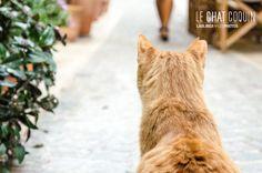 20130613 Cassis 1018 Les chats de Cassis