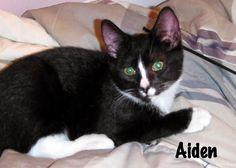 Animal Shelter Volunteer Life: Tuxedo Tuesday  - Opt to Adopt Aiden
