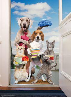 Animal Antics Portfolio - Stock Photos and Funny Pictures of Animal Antics Funny Animal Photos, Funny Animals, Funny Pictures, Cute Animals, Pet Pictures, Funny Cats And Dogs, Cats And Kittens, Kitty Cats, Animal Antics