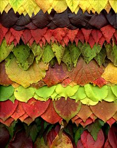 51670 Clethra, Cotinus, Rhododendron, Chionanthus, Fothergilla, Celsatrus, Stewartia, Viburnum, Vaccinium by horticultural art, via Flickr Photo Texture, Autumn Garden, Patterns In Nature, Land Art, Natural Texture, Art Techniques, Dried Flowers, Garden Inspiration, Photo Art
