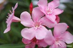 Resultado de imagen para flores silvestres