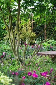 Jo Thompson Landscape  Garden Design - House  Garden, The List