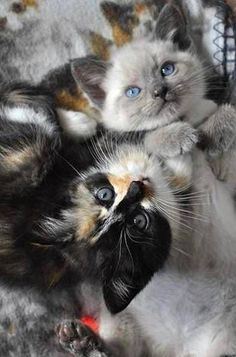 How adorable is this picture of two kitties?