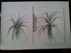 Charcoal on paper. Smosh, Charcoal, Artsy, Tattoos, Paper, Artwork, Plants, Tatuajes, Work Of Art