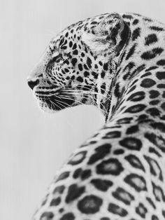 such a beautiful creature