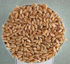Natural Health Remedies, Baby Knitting Patterns, Dog Food Recipes, Almond, Allah, Pasta, Dog Recipes, Almond Joy, Almonds