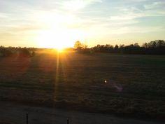 wiosenny obrazek mazowieckiej łąki