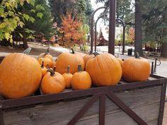 Santa's Village, Pumpkin, Vegetables, Food, Pumpkins, Essen, Vegetable Recipes, Meals, Squash