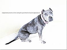 Meet Lucy, a CERTIFIED Therapy Dog and Canine Good Citizen. She is not being considered for the therapy dog program at Schuylkill Valley Schools because of her breed. Go to her facebook page to like her and show your support.          https://www.facebook.com/LettersForLucy/info