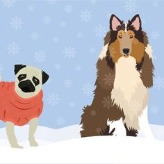 How to keep pets healthy all year round