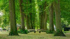 Baumallee im Kurt-Schumacher-Park in Schiefbahn