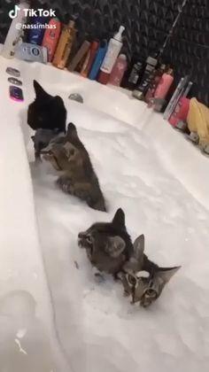 Cute Little Animals, Cute Funny Animals, Funny Cats, Funniest Animals, Silly Cats, Funny Humor, Cute Animal Videos, Funny Animal Pictures, Cute Kittens
