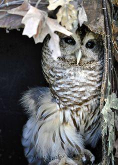 Owl by Kimberley Logan