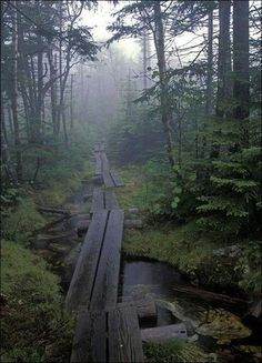 The long trail, located in Vermont, longest distance, runs through the state and oldest built 1920-1930