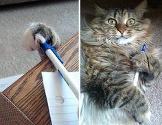 20 chats pris en flagrant délit de vol de bouffe (les croquettes ça va cinq minutes)