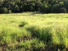 De Fazenda Poço Redondo  Massai