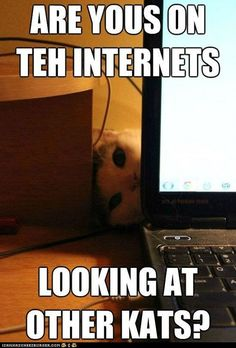 funny-pictures-what-do-those-other-kitties-have-that-i-dont-have1