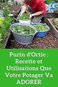 Purin d'Ortie : Recette et Utilisations Que Votre Potager Va ADORER. Nettle manure: recipe and uses that your vegetable garden will love. Permaculture, Garden Trellis, Garden Planning, Hydroponic Gardening, Garden Design, Garden, Small Vegetable Gardens, Potager Garden, Vegetable Garden Design