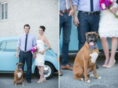 Dog bowties, boxer in wedding, dogs at weddings, fresh wedding ideas, brunch wedding, short wedding dress, pink and gold wedding, navy and pink wedding, groom in jeans.  http://greenweddingshoes.com/bright-playful-breakfast-wedding-inspiration/  The Jen + Ashley Styled Shoot   Dessert for Breakfast Pink, Gold + Navy Wedding