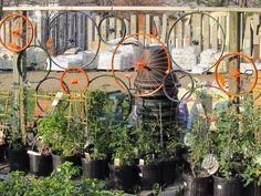 Image result for bicycle wheel trellis